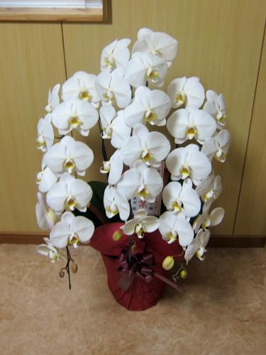 オープン記念の花1