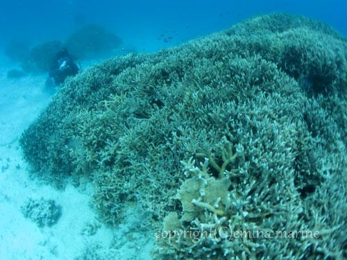 サンゴいっぱいの海