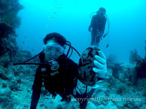ナマコで楽しくなる体験ダイビング