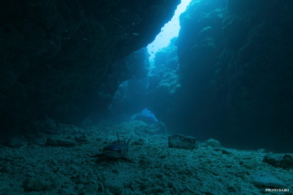 中の島チャネル