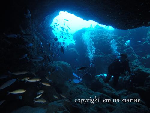 洞窟内のグルクン