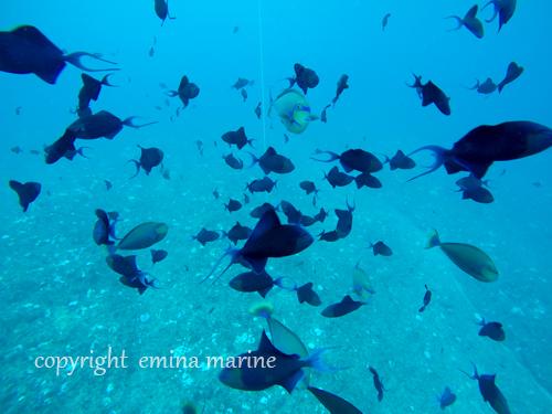 集まる魚たち