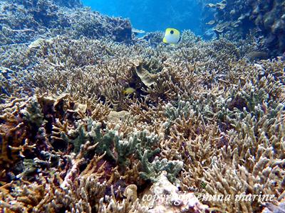 サンゴいっぱい