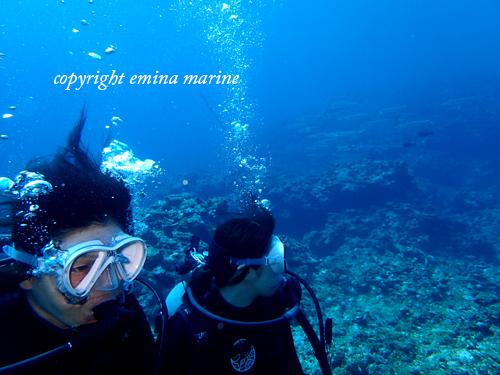 オオメカマスと体験ダイビング