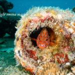 貝殻探しもマクロダイビングの1つのスタイル