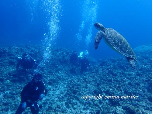 アオウミガメをみんなで見るダイビング