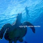 透明度抜群の海でウミガメダイビング