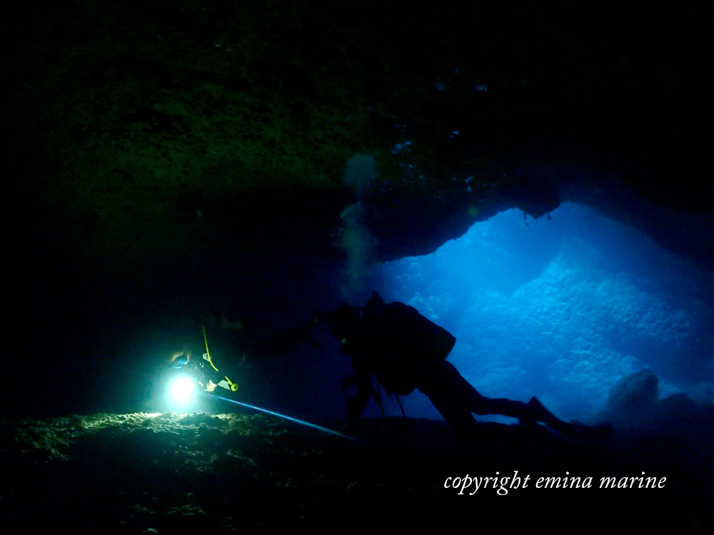 洞窟内で生物探し
