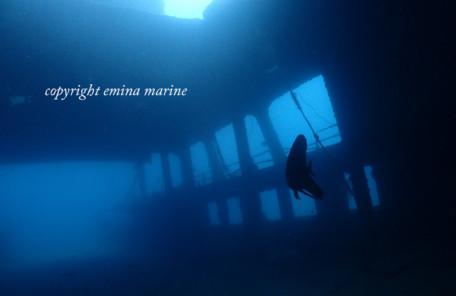 沈船にアカククリ