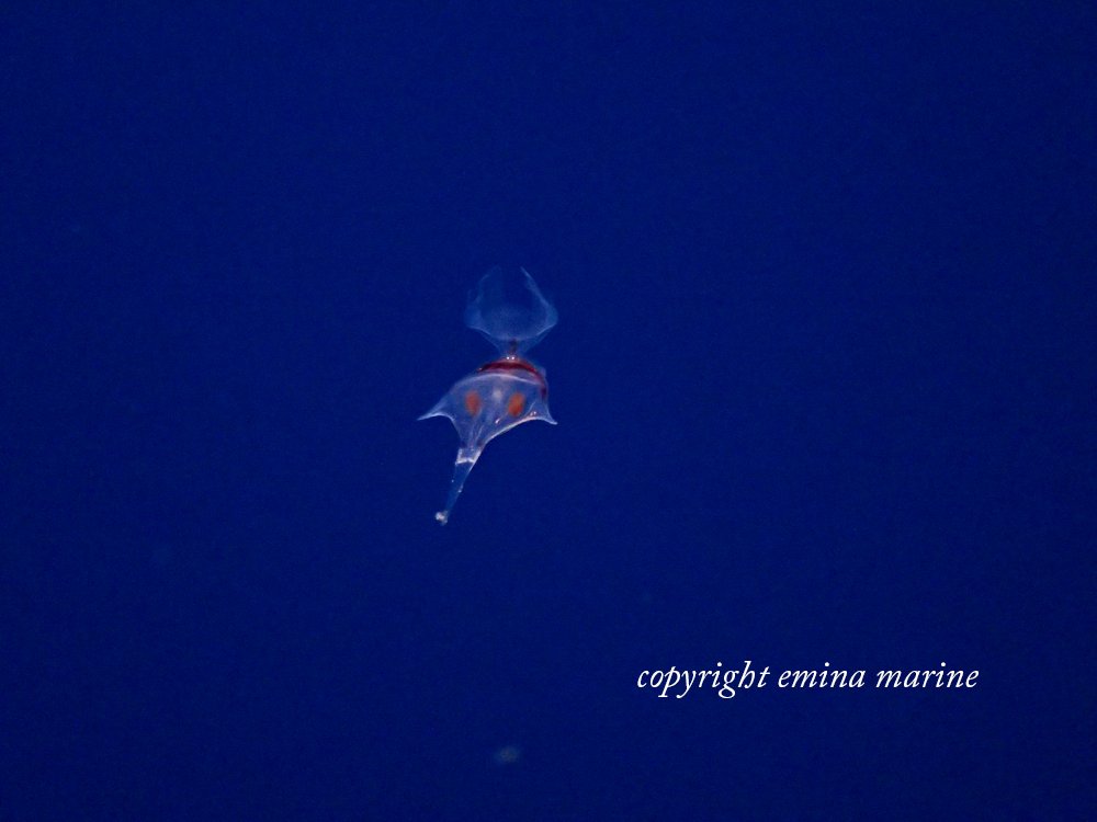謎な浮遊生物
