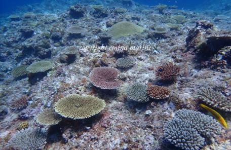 珊瑚の赤ちゃん