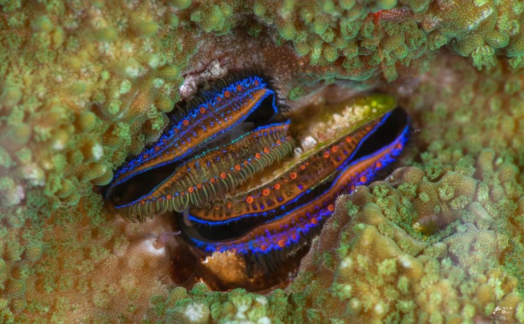 綺麗な模様の貝