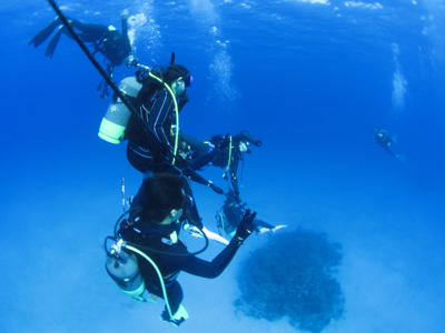 宮古島でダイビングするベストシーズンは?