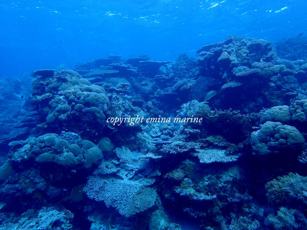 元気なサンゴが広がるパラオの海